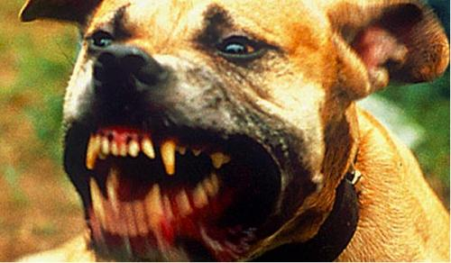 Ten Most Dangerous Dogs you don't want to own or keep as a Pet