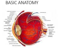 BASIC ANATOMY AND FUNCTIONS OF THE EYE mummys lecture.pptx